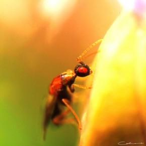 Flying Ant by Catherine van der Weele