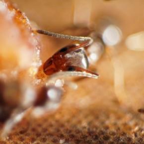 Ant by Catherine van der Weele