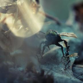 Control over Nature: Amon Tobin & Tessa Farmer