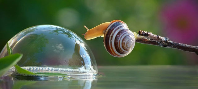 Vyacheslav Mishchenko Captures Larger-Than-Life Snails